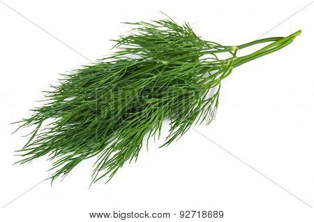 Bunch Of Fresh Green Dill Isolated On White