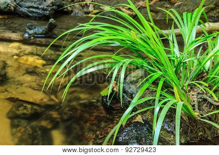 Green Grass Growing On Stone In Stream.