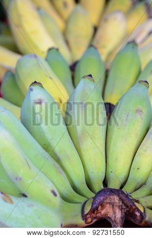 Close Up Banana.