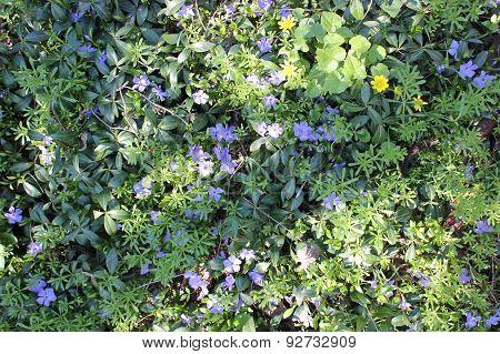 spring blue wild flowers