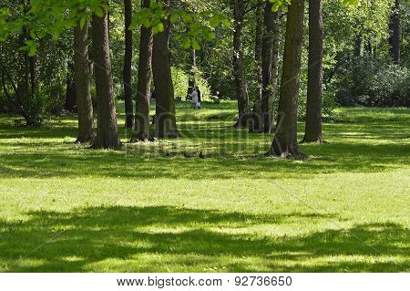 Shady lawn in the park.