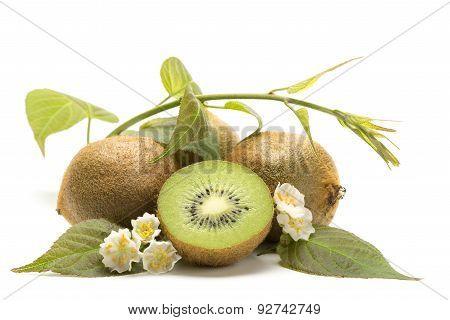 Kiwi - Fruit, Flowers And Leaves