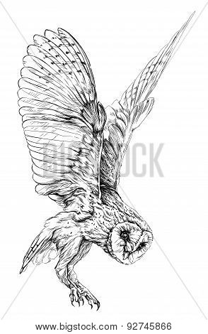 Sketch of Barn owl. isolated on white vector illustration