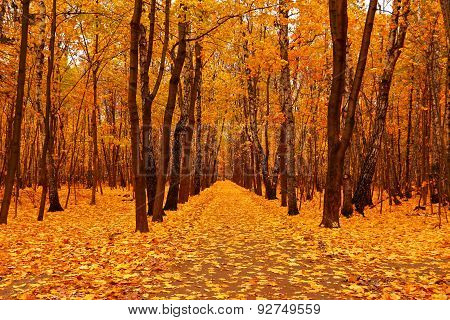 Autumn Forest In Deep Autumn. Golden Fall