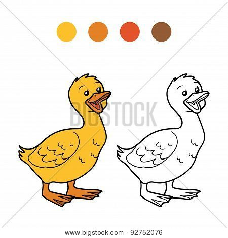 Coloring Book (goose, Chick)