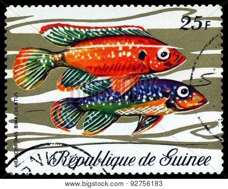 Vintage  Postage Stamp. Fish Hemichromis Bimaculatus.