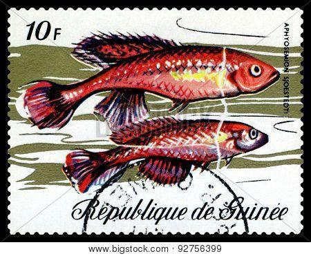 Vintage  Postage Stamp. Fish Aphyosemion Sjoestedti.