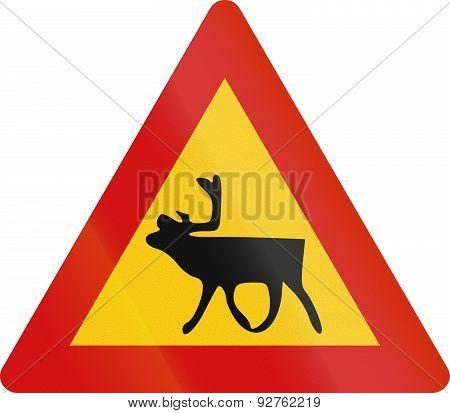 Reindeer Crossing In Iceland