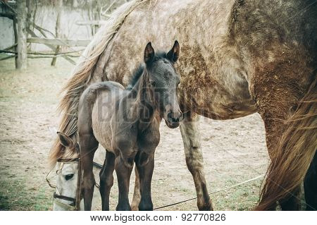 brown foal is about mare