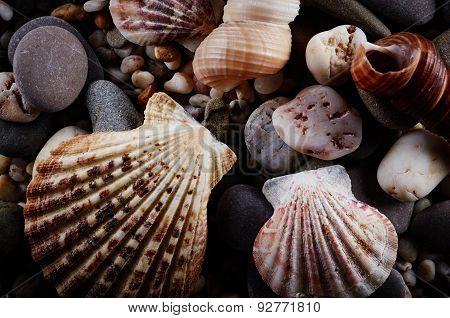 Stones And Seashells