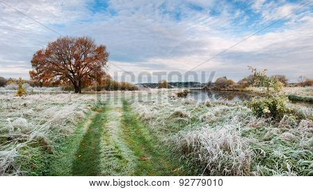 Autumn morning landscape with the first frost, the yellowing lonely tree and the river