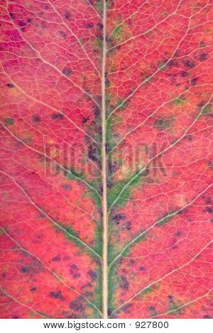 Macro Photo Of Fallen Autumn Leav