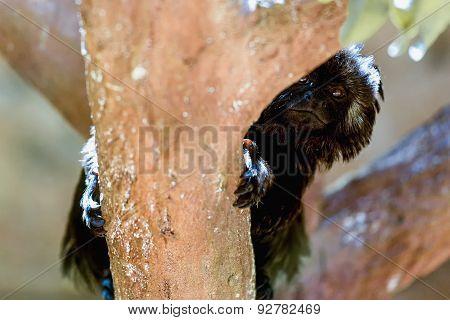 Black Monkey On Tree