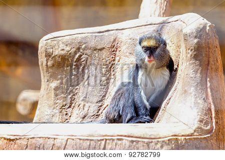 Monkey In Zoo