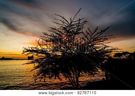 silhouette of tree, The atmosphere during sunset at Koh Loi Sriracha,Chonburi,Thailand