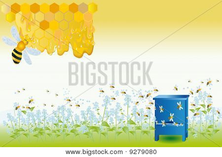 Bees Collect Honey