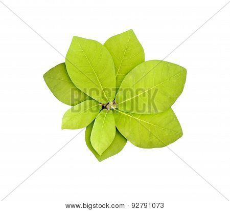 Green plant isolated over white.