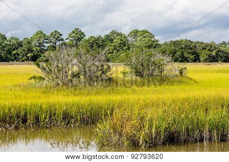 Trees In Golden Green Marsh Grass