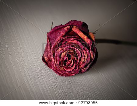 Withered Rose On A Wooden Surface