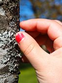 foto of lichenes  - Little girl with cracked pink nail paint touching lichen on tree trunk - JPG