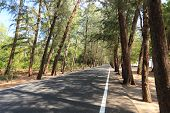 picture of coniferous forest  - Coniferous forest Road in Thailand Asia nature park - JPG
