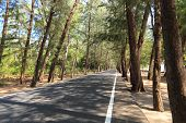 stock photo of coniferous forest  - Coniferous forest Road in Thailand Asia nature park - JPG