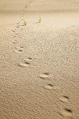 foto of animal footprint  - animal footprints on the sand of riverbank - JPG