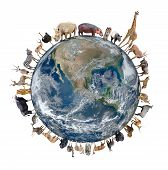 stock photo of herbivore animal  - animal stand around the world isolated on white backgroundElement of this image are furnished by NASA - JPG