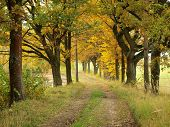 stock photo of bohemia  - insight into the autumn woods southern Bohemia Czech Republic - JPG