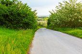 foto of vegetation  - Road is going downhill trough fresh spring vegetation - JPG