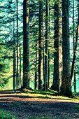 Acid Forest Vegetation