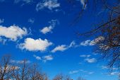 pic of float-plane  - From earth to deep blue sky with floating clouds through trees - JPG