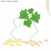 stock photo of gourds  - Healthcare Concept Illustration of Ivy Gourd Leaves or Coccinia Grandis Leaves with Vitamin A Vitamin C and Minerals Tablet Essential Nutrient for Life - JPG