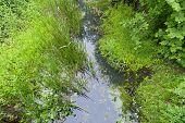 image of vegetation  - green vegetation growing in a cloudy creek - JPG