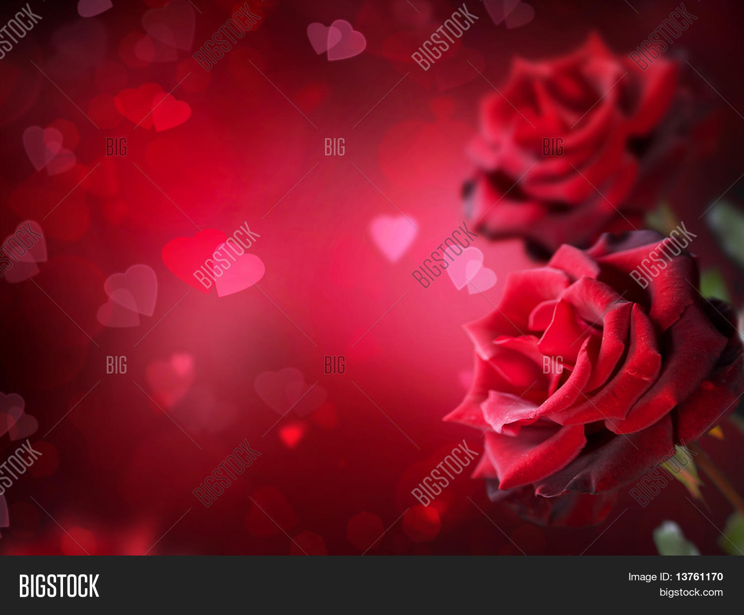 hd wallpapers rose day