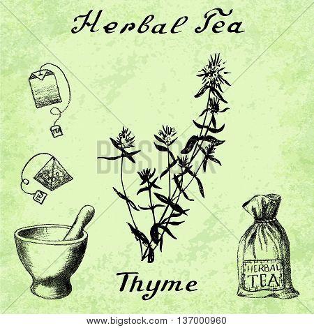 Herbal tea thyme mortar and pestle bag tea bag. Vector hand drawn illustration. Botanical drawing. Pencil drawing