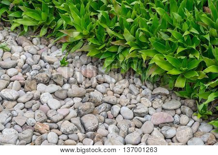 Gravel rocks and plants in garden in Thailand
