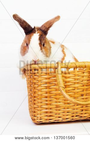 Spotted bunny in a basket on wooden background