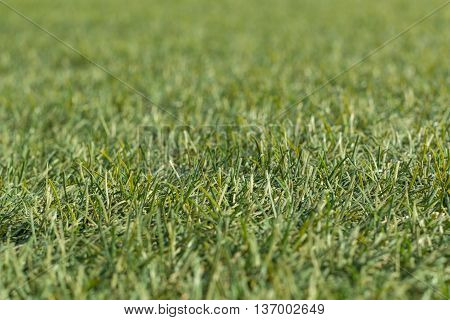 Artificial green grass shot low down  and close up with narrow depth of focus.