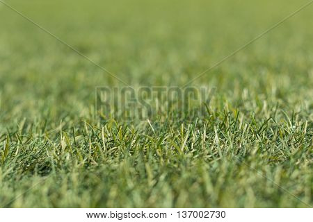 Artificial green grass shot low down  and close up with small depth of focus.