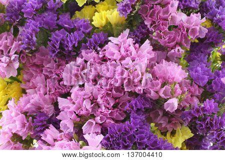 Pink, purple, yellow Statice Flowers  -  Limonium Background