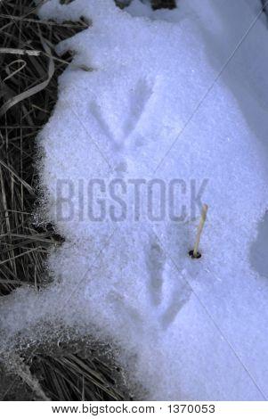 Frozen Bird Tracks