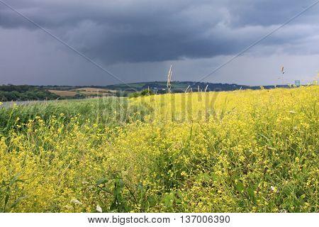Storm clouds over a rape field at Slapton, Devon