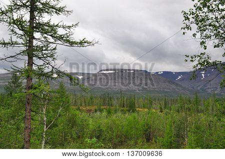 Foothill taiga. Putorana plateau Siberia the Taimyr Peninsula Russia.