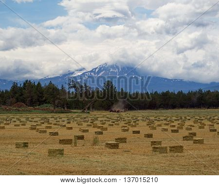 A bailer in Central Oregon works hard at getting the hay up before the rain comes.