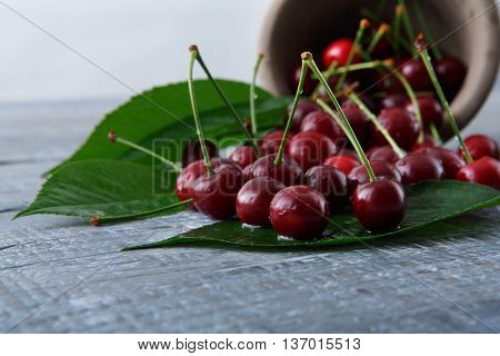 Sweet fresh cherries with green leaves pour out of a bowl on blue rustic wood. Closeup, scattered fruit backround. Healthy food at table