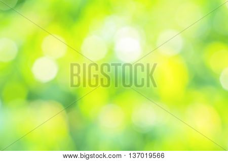 Blurring background of summer garden with sun glare on the leaves and flowers on a sunny day