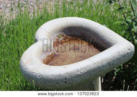 Heart shaped bird bath purple lavender flowers