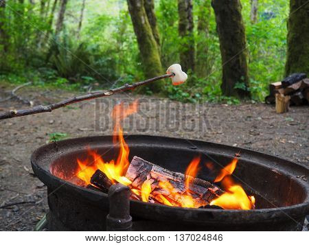 Campground Fire with Marshmallow in Green Forest