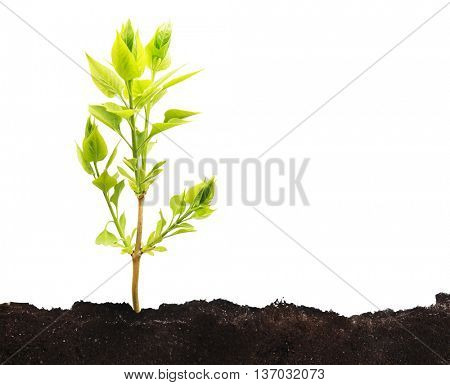 One little green plant growing from the ground